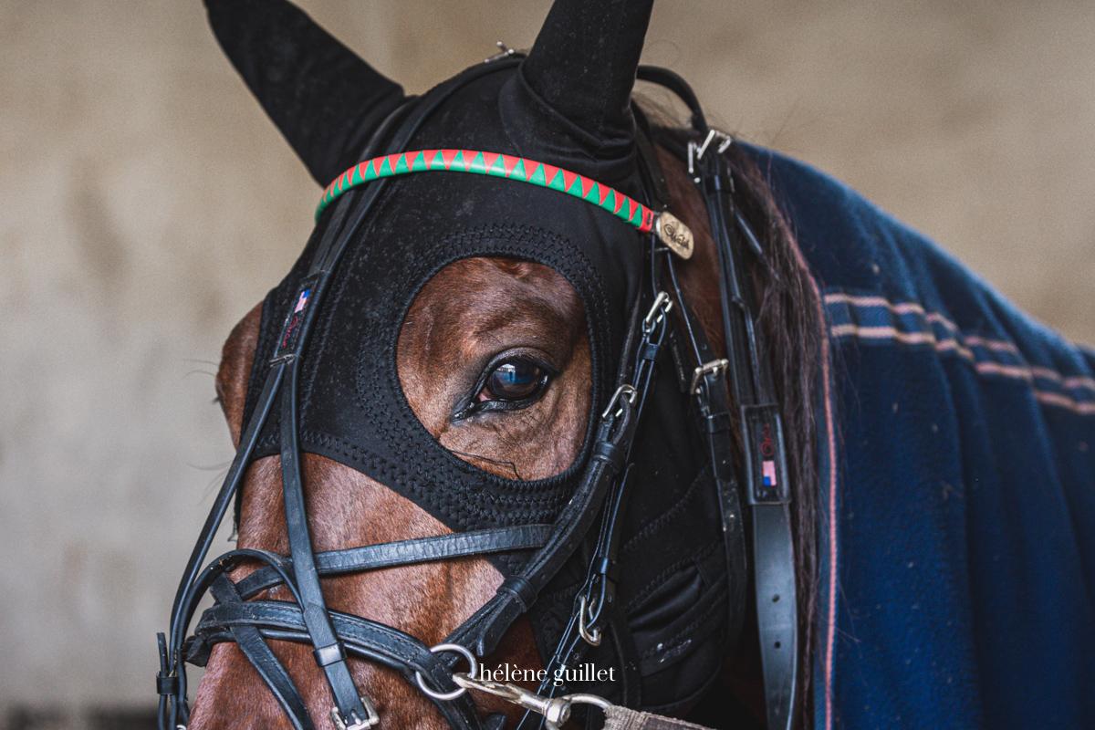 Photo cheval de course de trot