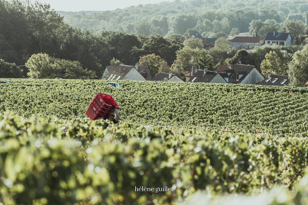 Vignoble champenois Louis Brochet