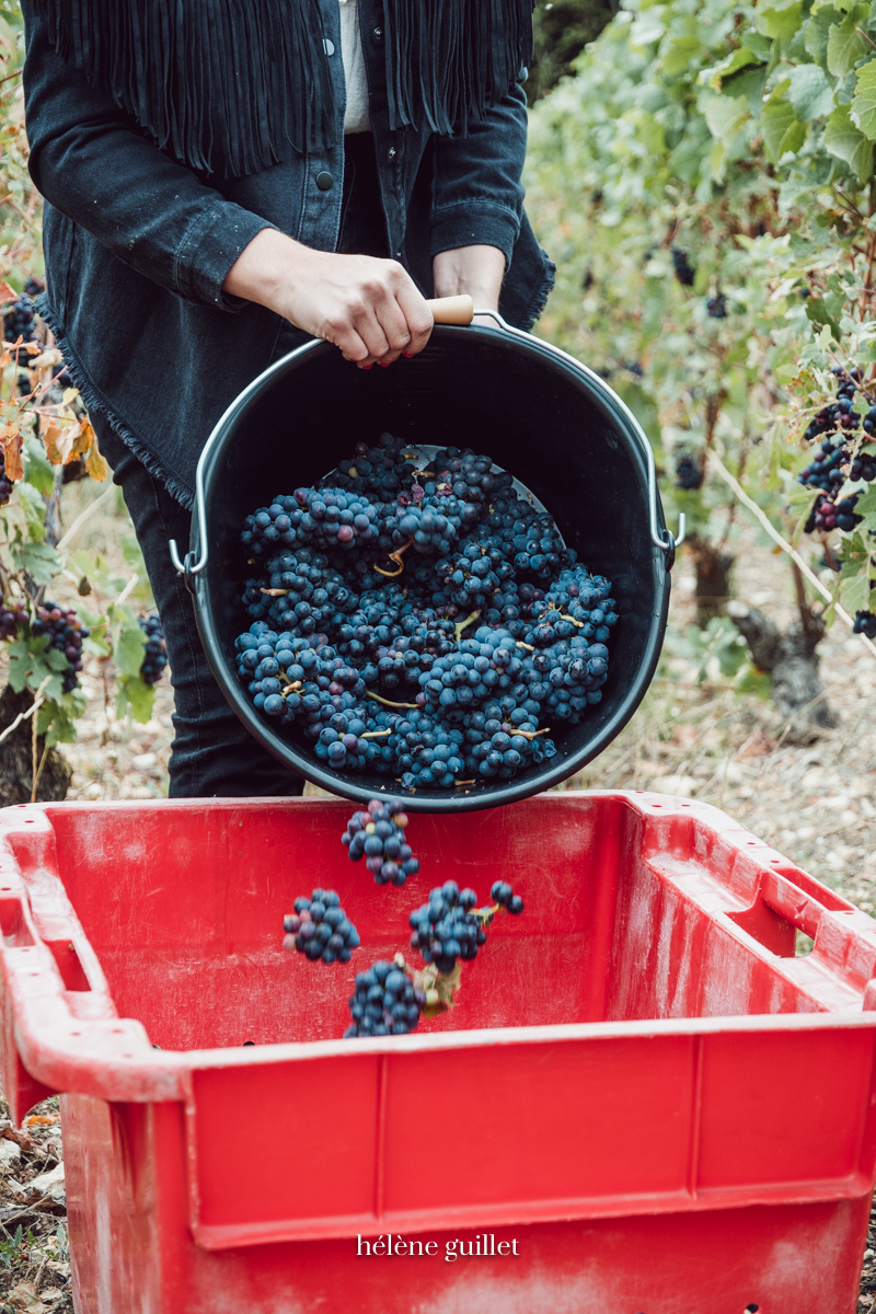 Caisse vendanges raisins Champagne Louis Brochet